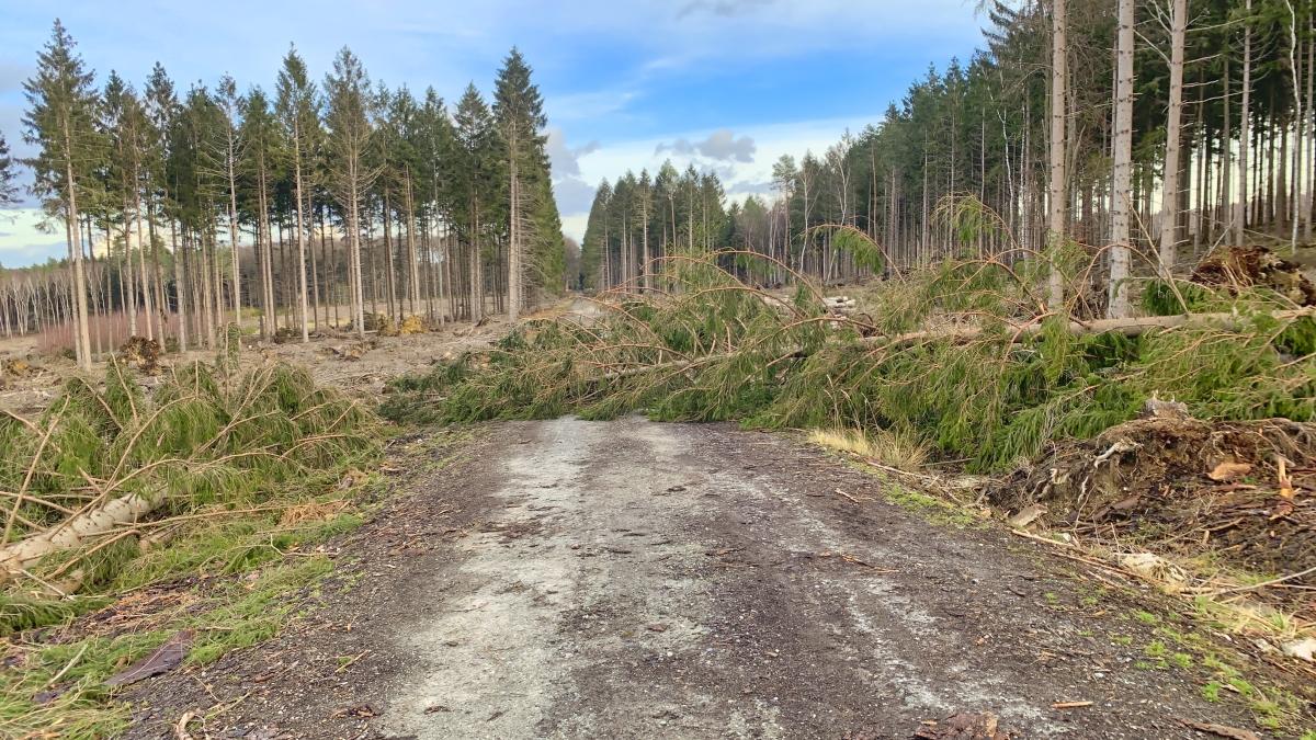Neuaufforstung des Waldes in der StädteRegion